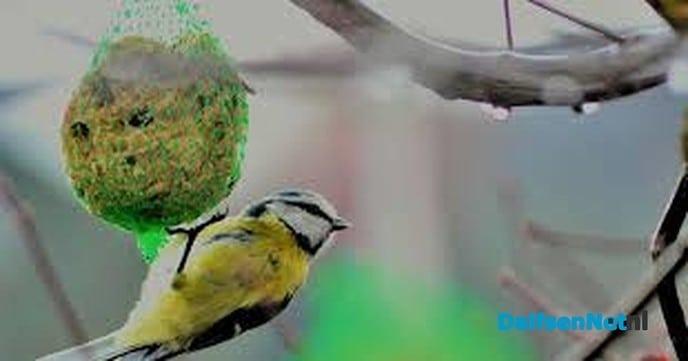 Denk aan de vogeltjes