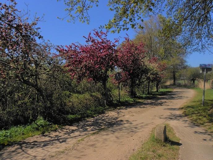 Prachtige bloeiende bomen - Foto: eigen geleverde foto