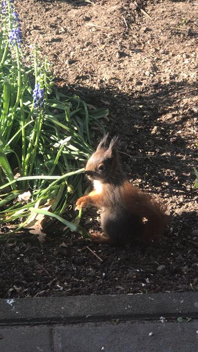 Jonge eekhoorntjes (deel 2) - Foto: Ingezonden foto