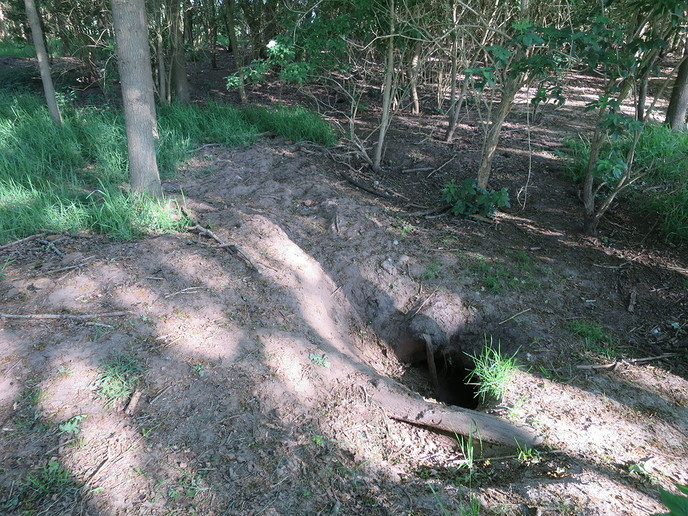 Enorme dassenburcht - Foto: Ingezonden foto