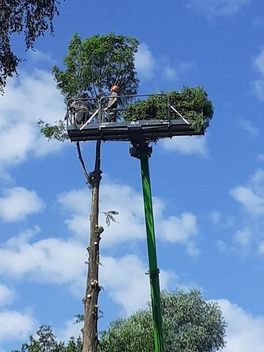 Hoge boom kopje kleiner gemaakt - Foto: eigen geleverde foto