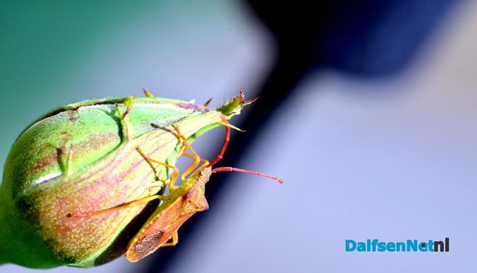 Kleurrijk - Foto: Ben Jonkman