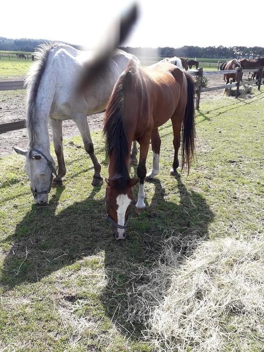 Je kunt weer paarden knuffelen tevens rommelmarkt - Foto: Ingezonden foto