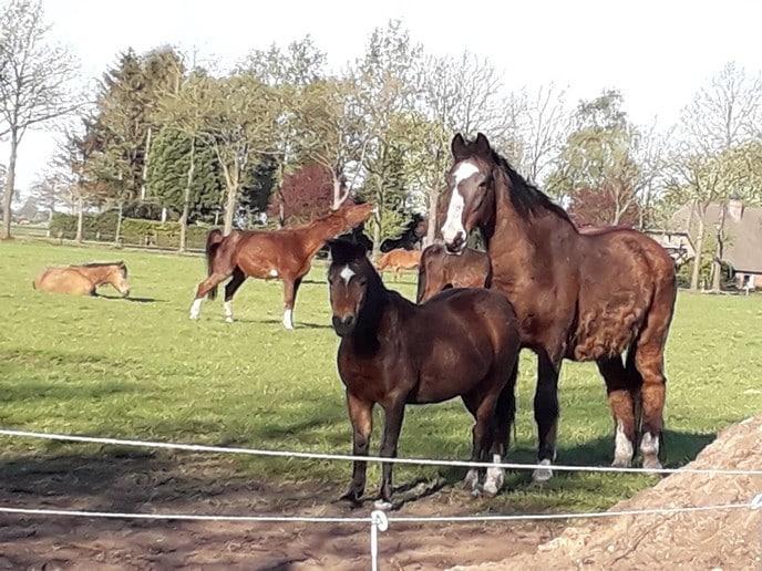 Paarden knuffelen en snuffelen en meer - Foto: eigen geleverde foto