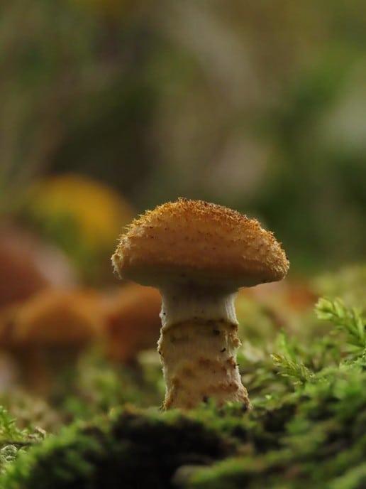 Herfst op de Horte - Foto: Ingezonden foto