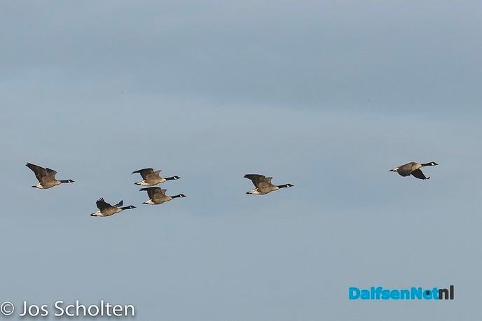 EuroBirdWatch - Foto: Ingezonden foto