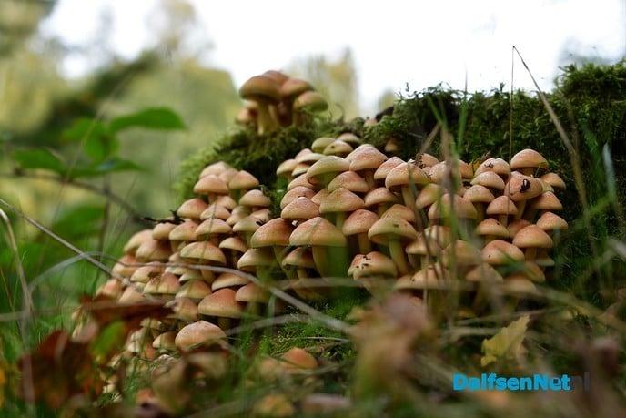 Herfst het kleurrijkste seizoen van het jaar - Foto: Johan Bokma