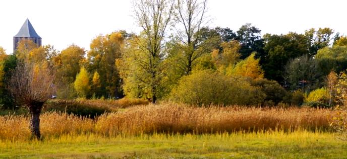 Herfstkleuren aan de Rondweg - Foto: Ingezonden foto