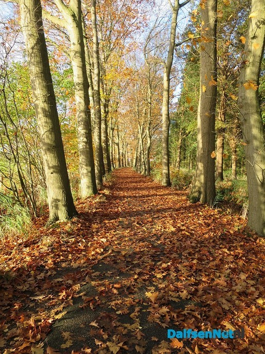 Herfst, ook aan de Mataramweg en Emmertochtsloot - Foto: Wim