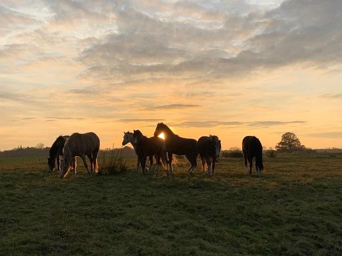 Pony's bij zonsondergang in Hessum - Foto: Ingezonden foto