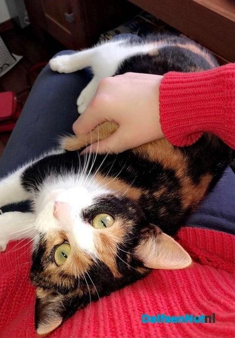 Onze kleine lapjes kat Luna was vermist - Foto: Ingezonden foto