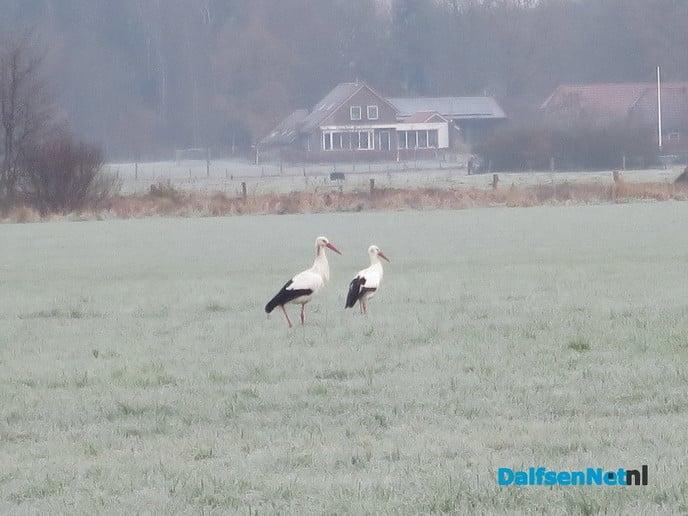 Winter aan de Emmertochtsloot - Foto: Wim