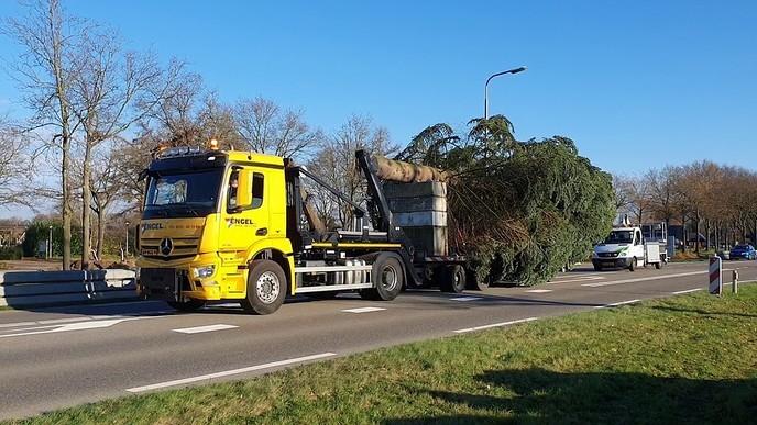 De boom uit Dalfsen staat ( in Zwolle)