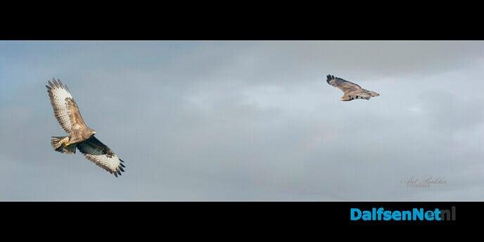 In vogelvlucht - Foto: Ingezonden foto
