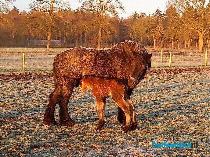 Geboorte - Foto: Ingezonden foto
