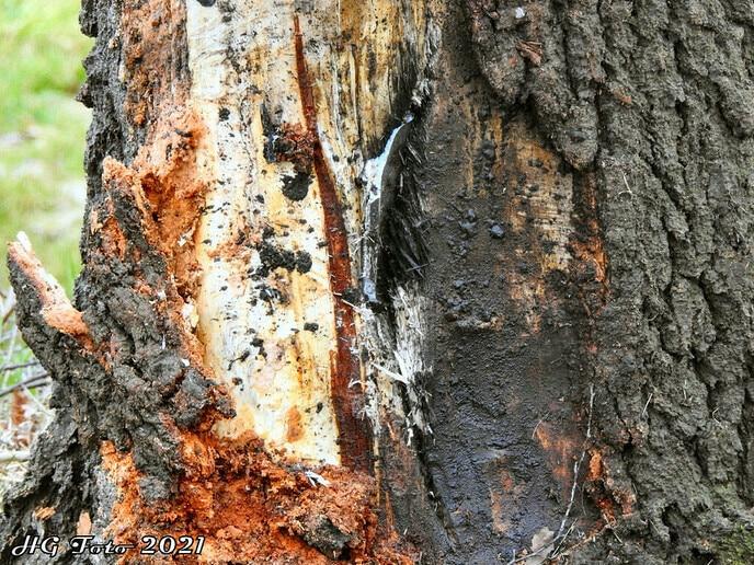 Auto tegen een boom aan de Dommelerdijk