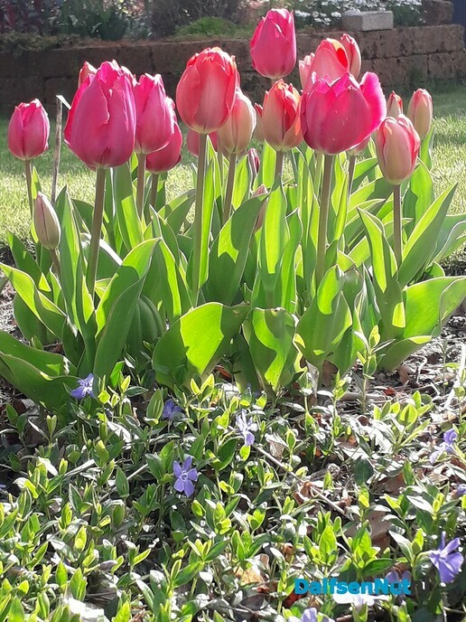 Ankum in de fleur - Foto: Ingezonden foto