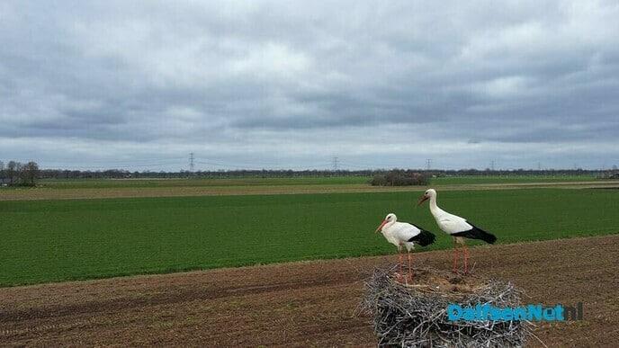 Ooievaarsnest Oudleusen - Foto: Ingezonden foto
