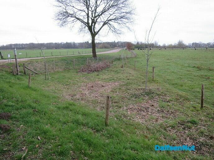 Klimaatbos van slechts 3 boompjes - Foto: Wim