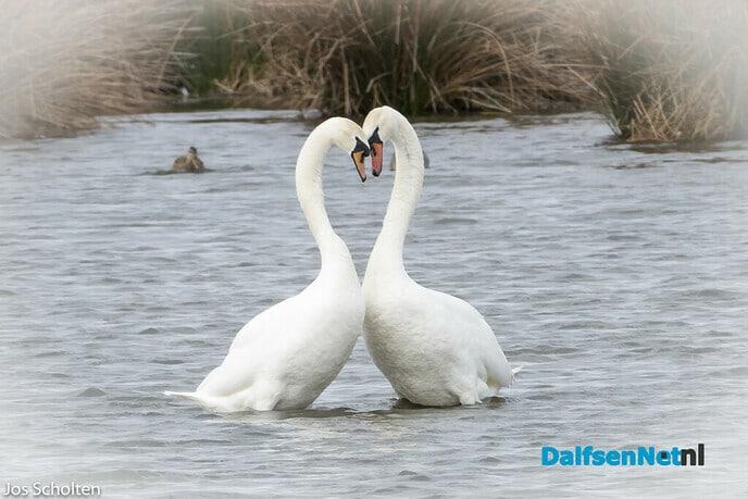 """""""Love is in the air"""" - Foto: Ingezonden foto"""