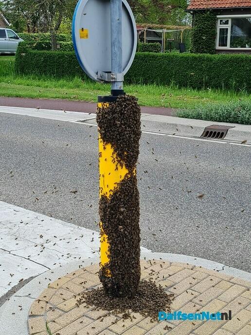 Bijen - Foto: Ingezonden foto