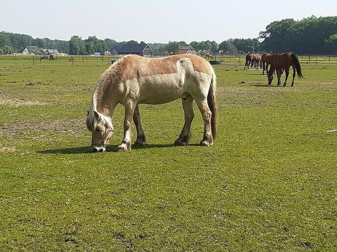 Reactie van de Manege op bijdrage Paard aan de Koesteeg - Foto: William uit Dedemsvaart