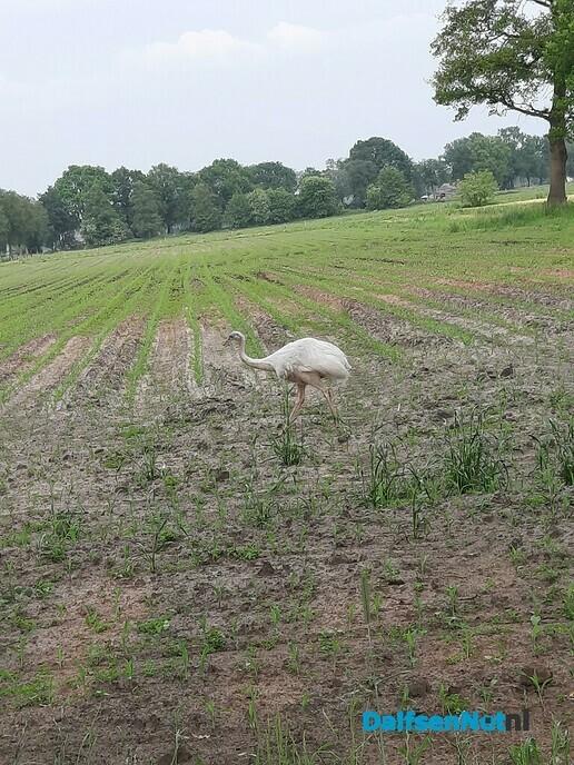 Witte Nandoe gespot - Foto: Ingezonden foto
