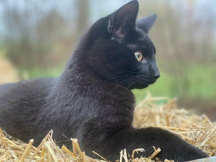 Onze kat Bras is zoek - Foto: Ingezonden foto
