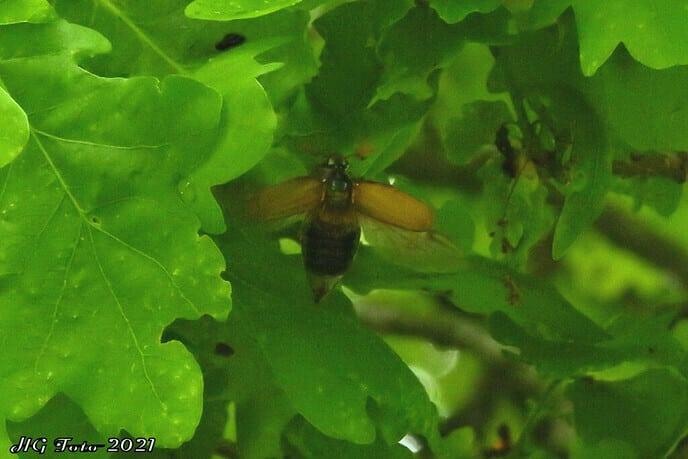 Meikevers in overvloed dit jaar