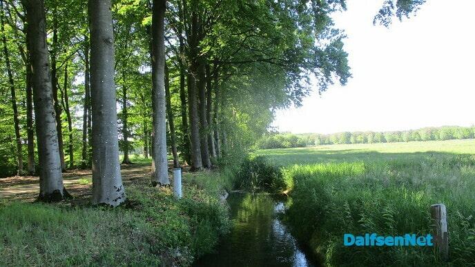 Let op, het Willemspad gaat weer bloeien