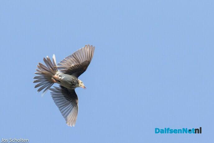 Parachutevogeltje - Foto: Ingezonden foto