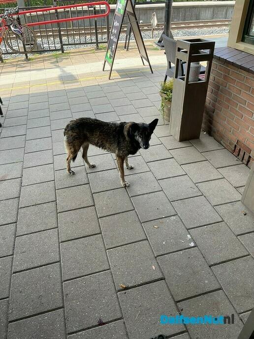 Hond aan komen lopen - Foto: eigen geleverde foto