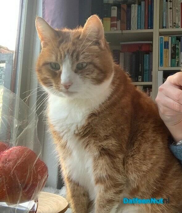 Kat vermist - Foto: Ingezonden foto