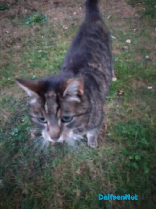 Kat vermist? - Foto: Ingezonden foto