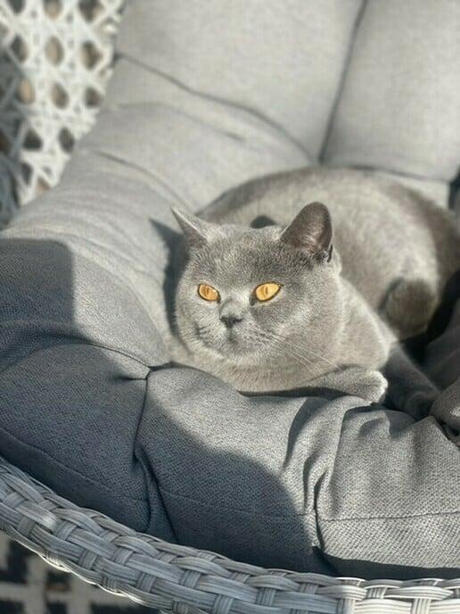 Weer een kat weg, maar is inmiddels weer terug - Foto: Ingezonden foto