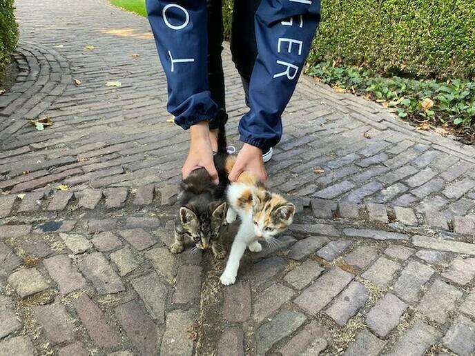 Kittens gevonden en weer thuis - Foto: Ingezonden foto