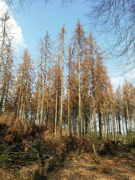 Werken aan klimaatbestendig bos, ook in Dalfsen - Foto: Ingezonden foto