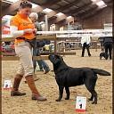 Old Averest labrador uit Ommen beste van het ras!