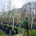 Planten van struiken en bomen het kan nog net