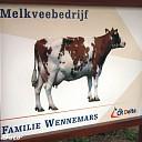Koeien de wei in bij melkveehouderij Wennemars in Dalfsen