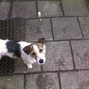 Wie mist zijn hondje in Lemelerveld