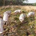 Open dag Overesch Ecologische Landbouw.