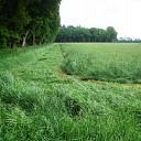 Dit gras is niet lang meer lang.