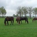 Rommelmarkt en Samen Picknicken met de paarden