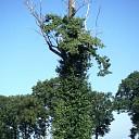 Boom dood, boom leeft, boom gaat dood.