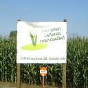 Maisdoolhof: een doolhof van maïsplanten
