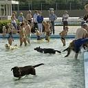 Baasje en hond zwemmen