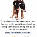 Animal in Need Nieuws