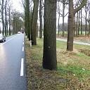 Bomen met stip, wordt alles omgezaagd?