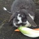 gezocht ons konijn fluffy